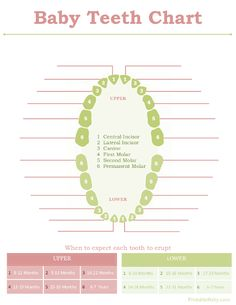 Baby Teeth Chart - Many times, something cold in your child's mouth helps. My baby just has a few teeth. Once your baby has their initial teeth showing, you should begin. Baby Teething Chart, Tooth Chart, Toddler Development, Baby Memories, Family Memories, Everything Baby, Baby Milestones, Baby Time, Free Baby Stuff