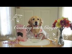 Cooking With Ginger -- golden retriever bakes a cake -- there are some Ginger knockoffs out there, but there is only one Ginger.