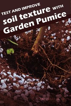 The most important factor when beginning to cultivate your garden is to know your soils texture whether it's sand, silt, clay, or something else. Testing the texture is something that every gardener can do at home. Garden Soil, Garden Beds, Soil Texture, Pumice Stone, Soil Ph, Soil Improvement, Types Of Plants, Horticulture, Organic Gardening