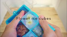 Making flower filled ice cubes with HempGin Flower Ice Cubes, Make It Yourself, Learning, Videos, Flowers, Youtube, Blog, Studying, Blogging
