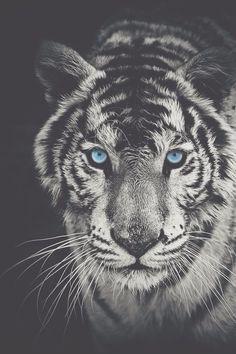 Rei do Cabaré : Foto