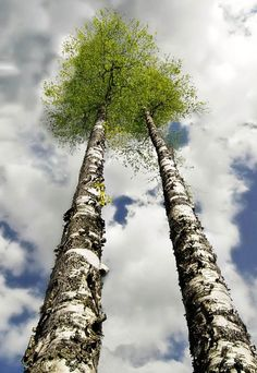I thank you God for this most amazing day, for the leaping greenly spirits of trees, and for the blue dream of sky and for everything which is natural, which is infinite, which is yes. ~ E.E. Cummings