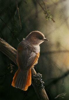 Kuukkeli Siberian Jay Perisoreus infaustus
