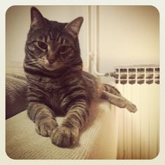 warm place :)  #cat #cats