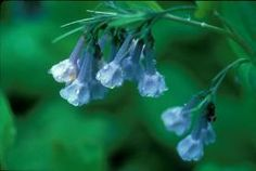 Native Plants for Your New England Garden, Non-Invasive Plants.