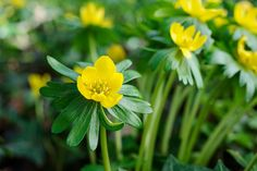 Advice on the plants that will help hungry bees through the winter into spring, from the experts at gardenersworld.com