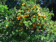 Creating a fruit tree guild or food forest in permaculture