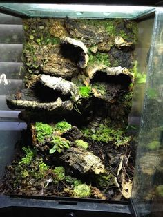 terrarium ideas Click the image to open in full size. Terrariums Gecko, Bartagamen Terrarium, Tree Frog Terrarium, Terrarium Reptile, Reptile Habitat, Reptile House, Reptile Room, Reptile Cage, Crested Gecko Habitat