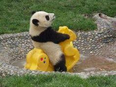 Panda like a 5 years old