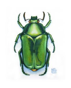 watercolor picture of beatle bugs - Google Search