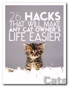 26-Terrific Hacks That Will Make Any Cat Ower's Life Easier.