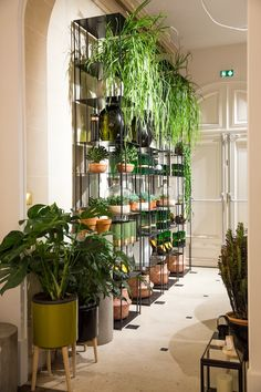 urban jungle mur vegetal plante tombante bibliotheque en fer acier decoration vegetal