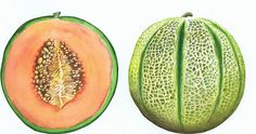 Galia melon David Lewry