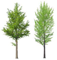 tree png image