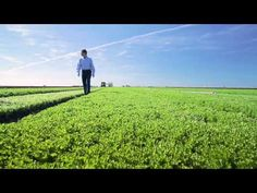 The price of going green [Video: Lowering The Price Of Organic Lettuce]