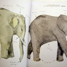 ★ Almost an Animal Alphabet by Katie Viggers