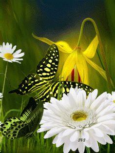 photo borboletas voando gifs_zpsjylg0eyp.gif