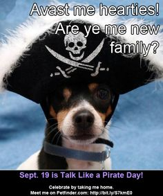 Click through to read how less-adoptable pets are celebrating Talk Like a Pirate Day!