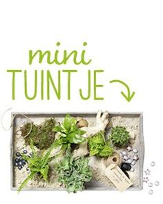 Transparante minituintjes maken - Intratuin