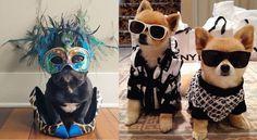 Gli animali domestici più fashion del web