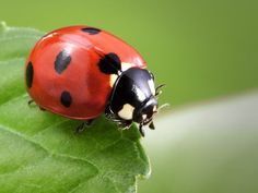 Image result for lady bugs