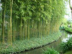 Claude Monet's House and Gardens: Paz!!!!