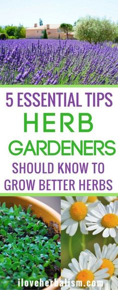 5 Essential Tips Herb Gardeners Should Know To Grow Better Herbs