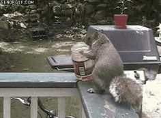 Squirrels can remember the hiding places of up to 10,000 nuts. | 16 Amazing Animal Facts That Make The World A Better Place