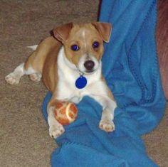 Jessie is a contestant for True Chews Dog of the Week! #TrueChews wish him luck <3