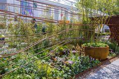 Dark Matter Garden at the RHS Chelsea Flower Show 2015 / RHS Gardening