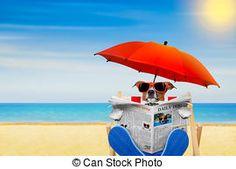 jack russelel honden afbeeldingen | Dog beach Stock Photo Images. 7,808 Dog beach royalty free pictures ...