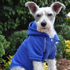 """Doggie Design's Style meets Function"""" Heavyweight Fleece Sport Sweatshirt Hoodie for Dogs in nautical blue.Sizes available for Small and Big Dogs XS thru Sports Sweatshirts, Hooded Sweatshirts, Pet Boutique, Embroidered Sweatshirts, Dog Hoodie, Dog Sweaters, Sporty Look, Pet Clothes, Big Dogs"""