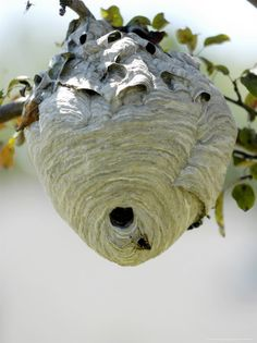 """Disturb a nest of wasps for no good reason"""