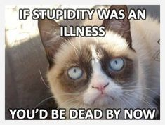 "Here's collection of some ""Top 22 Grumpy Cat Memes Hilarious"" that are so funny and humor.Just scroll down and keep enjoy these ""Top 22 Grumpy Cat Memes Hilarious"". Grumpy Cat Quotes, Funny Grumpy Cat Memes, Cat Jokes, Animal Jokes, Funny Animal Memes, Funny Animal Pictures, Funny Animals, Funny Memes, Sarcastic Jokes"