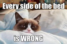 Grumpy Cat - ''Every side of the bed is WRONG.'' (The Official Grumpy Cat) (800×527)