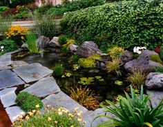 bassin de jardin avec nénuphars splendides et pierres