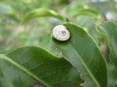 Petit escargot Porte sur son dos Sa maisonnette Aussitôt qu'il pleut i Il est tout heureux Et .... mange mes fleurs!