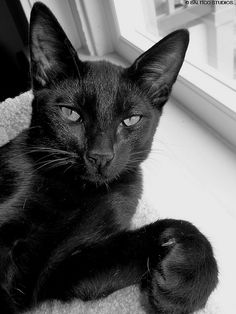 Gorgeous black cat showing us a paw.