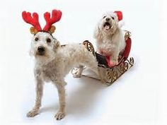 Sweet Funny Dog Christmas - Yahoo Image Search Results