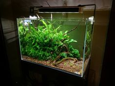 Planted Tank.