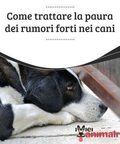 Springer Spaniel, Dog Friends, I Love Dogs, Pet Care, Pets, Life, Diy Dog, Animals, To Suffer