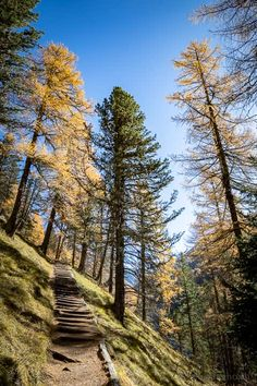 Saas Fee, Trekking, Places To Visit, Wanderlust, Hiking, Country Roads, Nature, Travel, Drive Way