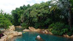 O que penso sobre Discovery Cove, o parque de Sea World onde as pessoas nadam…