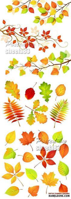 Осенние листья в векторе