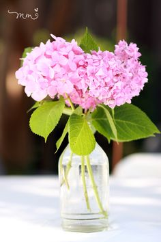 Tracey's garden flowers