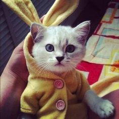 The Cutest Cats On The Internet Are Wearing Cardigans And It's Too Much Cute To Handle - Dose - Your Daily Dose of Amazing