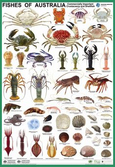 Poster-Crustacean-Species of Australia Nature Animals, Animals And Pets, Fish Chart, Fauna Marina, Kunst Poster, Types Of Fish, Ocean Creatures, Animals Of The World, Ocean Life