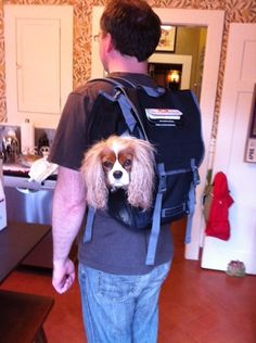 Product review: Timbuk2's Muttmover backpack dog carrier » Dog Jaunt