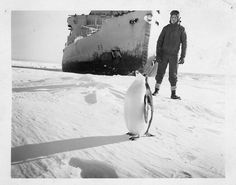 Operation Windmill Expedition Member with Penguin by Smithsonian Institution, via Flickr
