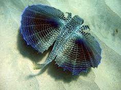 Resultado de imagem para peixes fashion